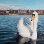Swan at Belfast Waterworks I - John Coffey
