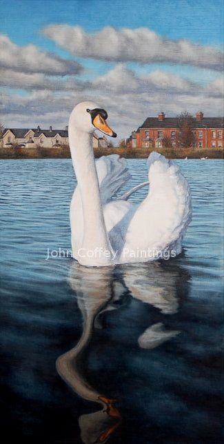 A beautiful portrait of a swan on calm reservoir deep blue waters and Belfast houses in the background. Lovely white, blue, red colours. The sky is blue with a few white and grey clouds