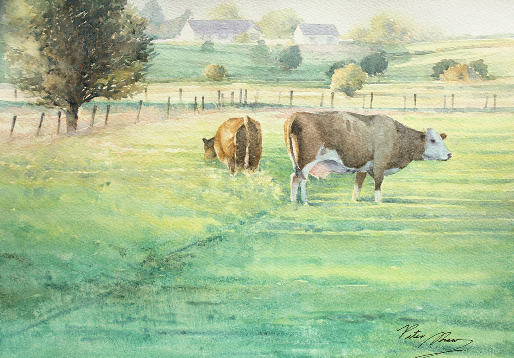 Watercolour painting of cows in a field with the farm in the background, evening light, nice long shadows