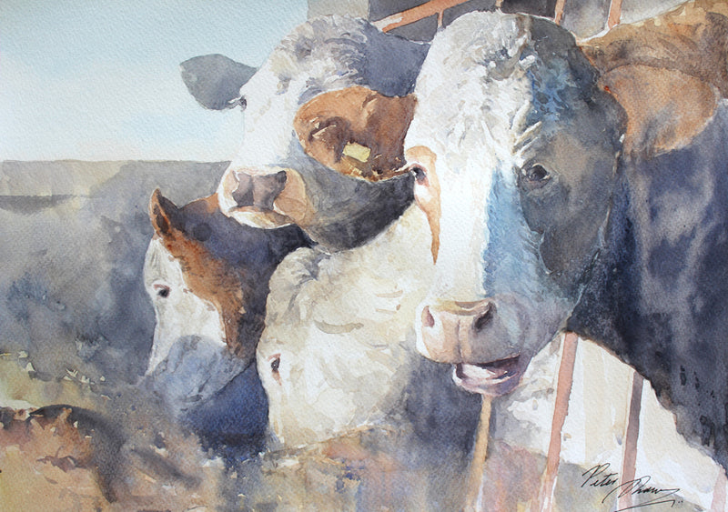 Table Manners - Cows on an Irish Farm - Watercolour by Peter Shaw