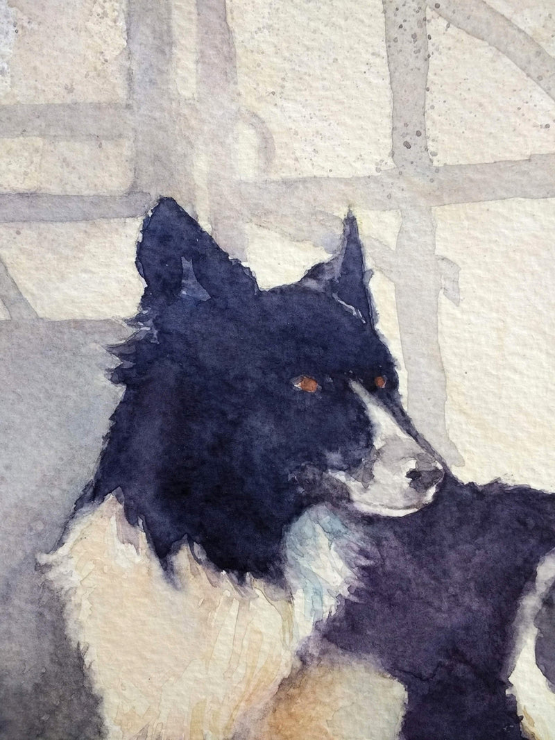 The Colonel - Border Collie on an Irish Farm - Watercolour by Peter Shaw