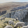 Sheep on Port Hill, acrylic Irish landscape painting by John Coffey