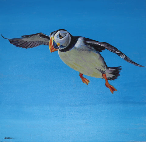 Alison Jess - Puffin in Flight