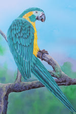 Blue Throated Macaw - Gouache and Watercolour painting by Robert Spotten