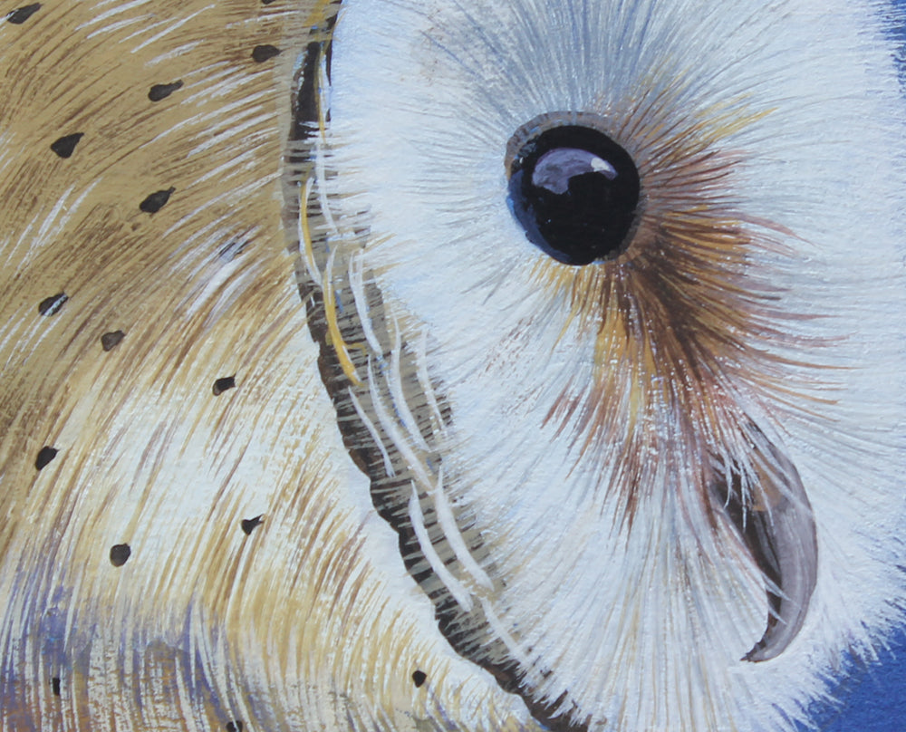 Barn Owl - Gouache painting by Robert Spotten