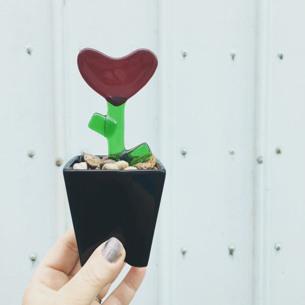 Growing Love Plant