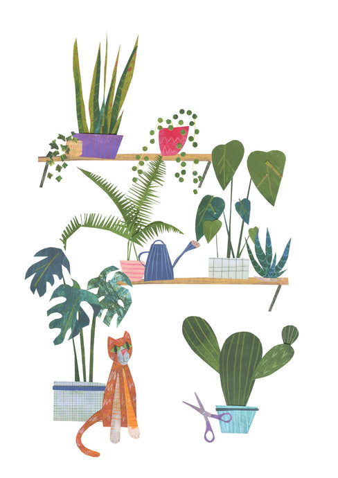 Lots of plants cactus monstera and ginger cat