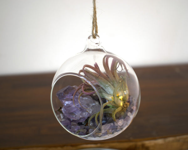Glass Sphere Terrarium Kit