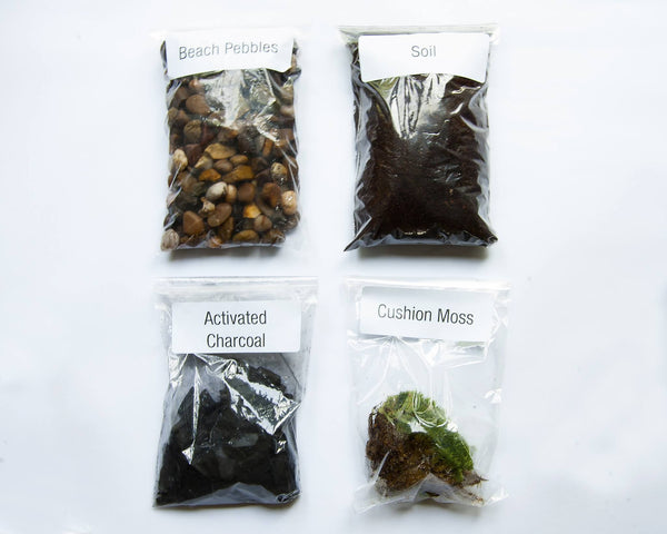 Terrarium Kit - Cushion Moss Terrarium Kit