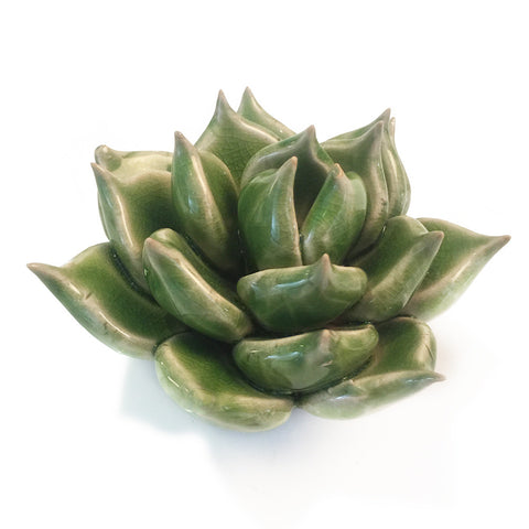 Green Ceramic Succulent