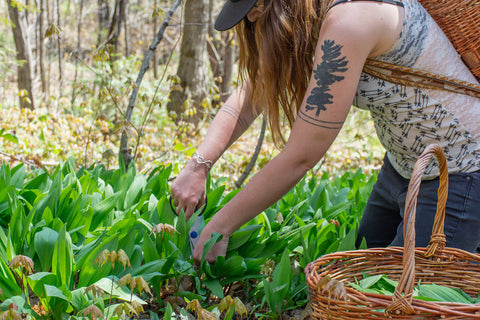 Connect to nature with wild food