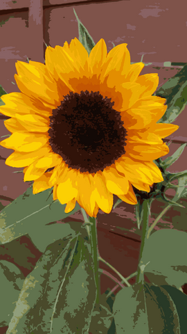Sunflower Paint by Number- Slate