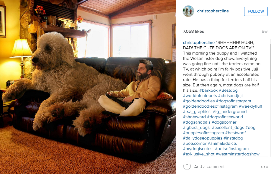 Chris Cline Goldendoodle Couch