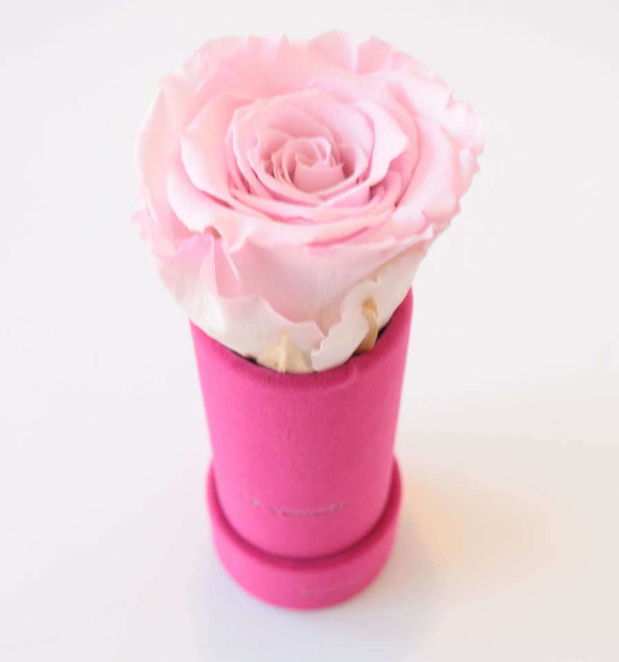 Beautiful Flowers Delivered for anniversaries, birthdays, corporate gifting - THE LOLLY by LK VERDANT