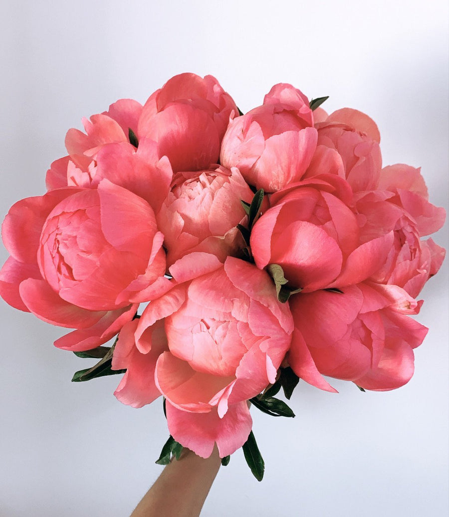 The Peony - Shop for Flowers and Forever Roses - LK VERDANT