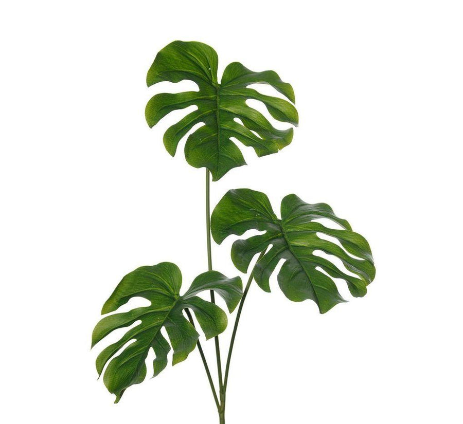 Monstera Deliciosa Plant - Shop for Flowers and Forever Roses - LK VERDANT