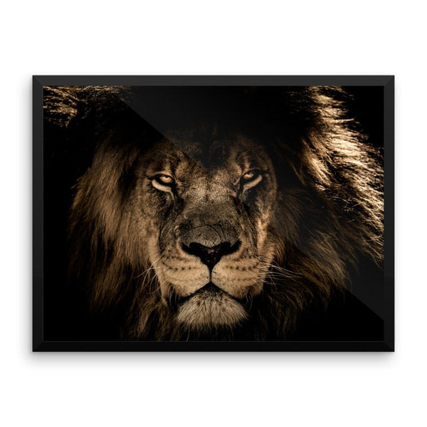 African Lion Framed Photo Poster Wall Art Decoration Decor For Bedroom Living Room