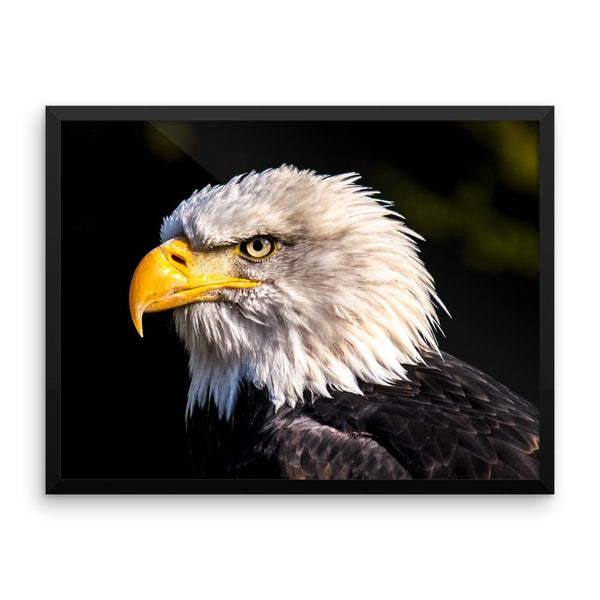Bald Eagle Framed Photo Poster Wall Art Decoration Decor For Bedroom Living Room