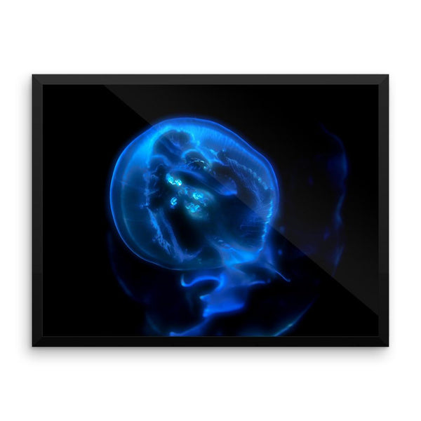 Blue Black JellyFish Framed Photo Poster Wall Art Decoration Decor For Bedroom Living Room