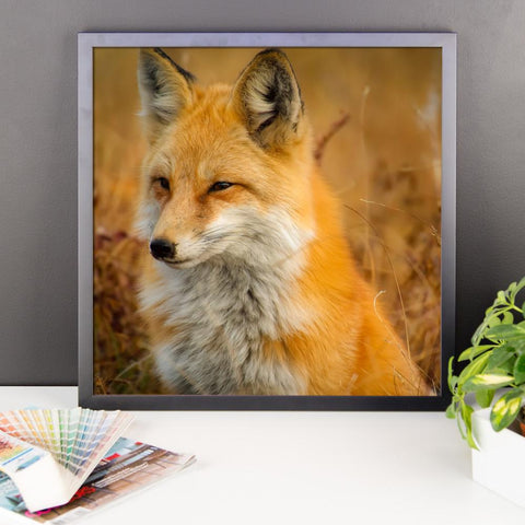 Fox Framed Photo Poster Wall Art Decoration Decor For Bedroom Living Room