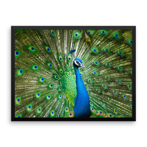Green Peacock Framed Photo Poster Wall Art Decoration Decor For Bedroom Living Room