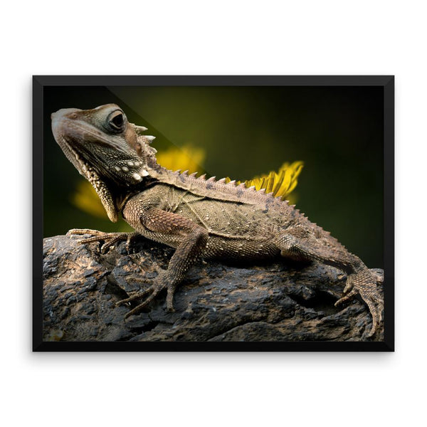Iguana Framed Photo Poster Wall Art Decoration Decor For Bedroom Living Room