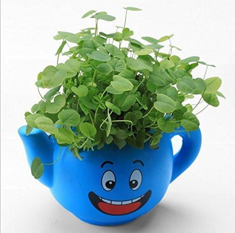 Lawn & Patio - LightningStore Cute Blue Pink Yellow Green Happy Angry Face Flower Plant Tea Pot Succulent Box Planter Flower Pot Eco Bottle Miniature Miero Landscape Vivaria Plants Pot