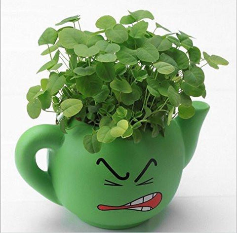 Lawn & Patio - LightningStore Cute Green Pink Blue Yellow Happy Angry Face Flower Plant Tea Pot Succulent Box Planter Flower Pot Eco Bottle Miniature Miero Landscape Vivaria Plants Pot