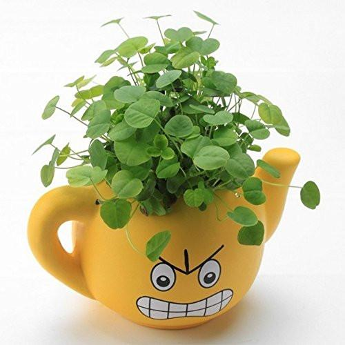 Lawn & Patio - LightningStore Cute Yellow Blue Pink Green Happy Angry Face Flower Plant Tea Pot Succulent Box Planter Flower Pot Eco Bottle Miniature Miero Landscape Vivaria Plants Pot