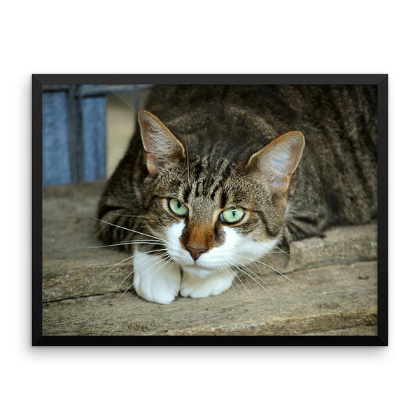 Starring Cat Framed Photo Poster Wall Art Decoration Decor For Bedroom Living Room