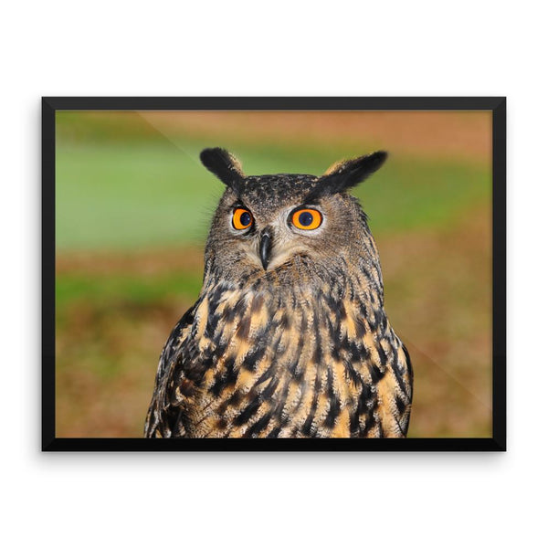 Starring Owl Framed Photo Poster Wall Art Decoration Decor For Bedroom Living Room