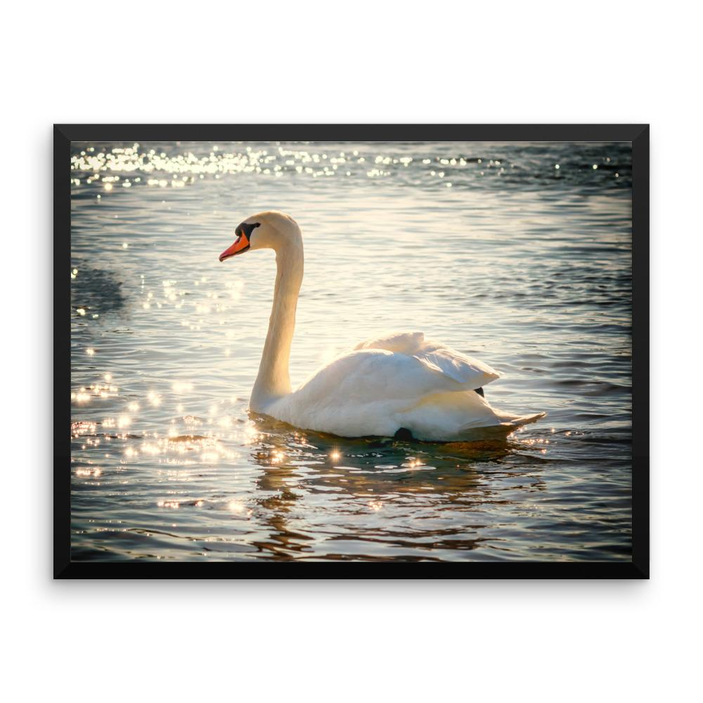 Swan Framed Photo Poster Wall Art Decoration Decor For