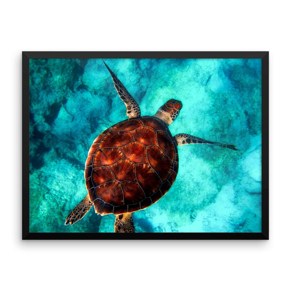 Turtle Swimming Framed Photo Poster Wall Art Decoration Decor For Bedroom Living Room