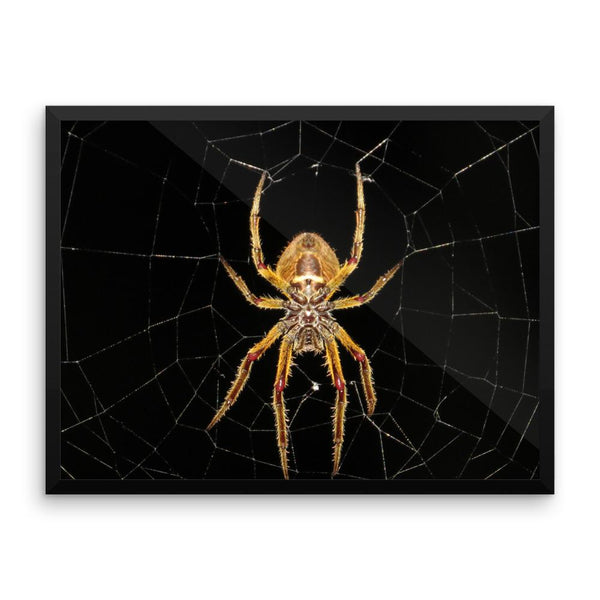 Yellow Spider Framed Photo Poster Wall Art Decoration Decor For Bedroom Living Room