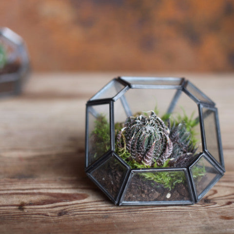 NKUKU ETHICALLY SOURCED ARTISAN HANDMADE FAIRTRADE TERRARIUM KIT