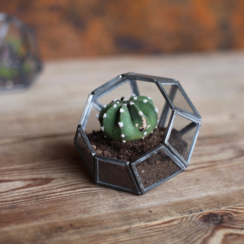 NKUKU ETHICALLY SOURCED ARTISAN HANDMADE FAIRTRADE TERRARIUM PLANT