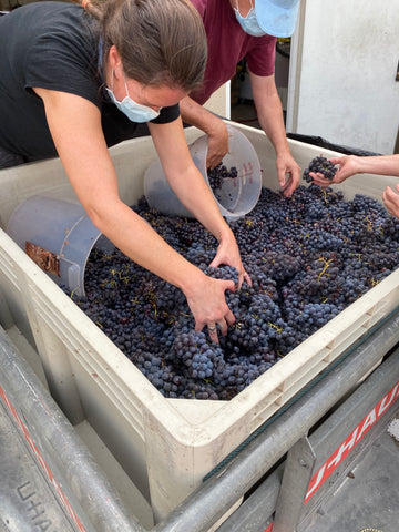 The Dirty Truth of Winemaking