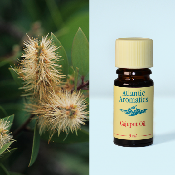 Atlantic Aromatics - Cajuput