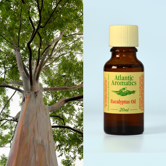 Atlantic Aromatics - Eucalyptus 20ml (Org) 3xPack