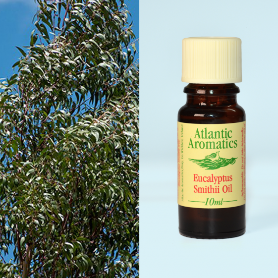Atlantic Aromatics - Eucalyptus Smithii (Org)	3x10ml