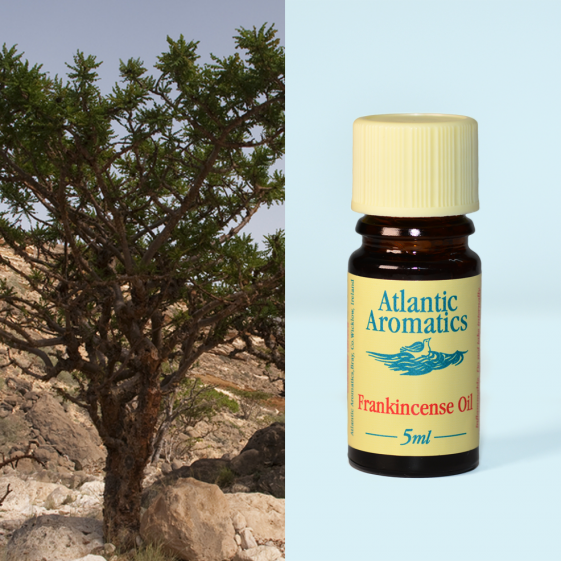 Atlantic Aromatics	Frankincense Wild	3x5ml