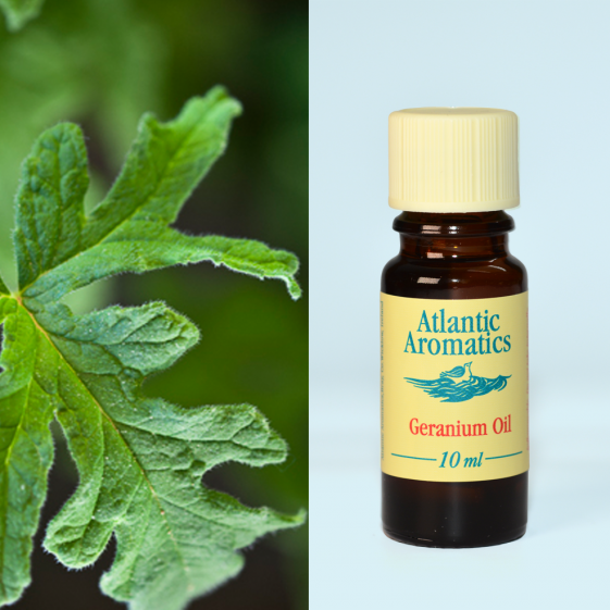 Atlantic Aromatics	Geranium Oil 10ml	3x10ml