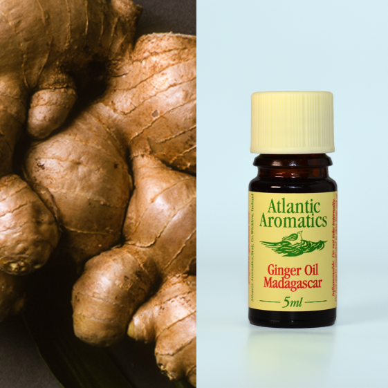 Atlantic Aromatics	Ginger (Org)	3x5ml