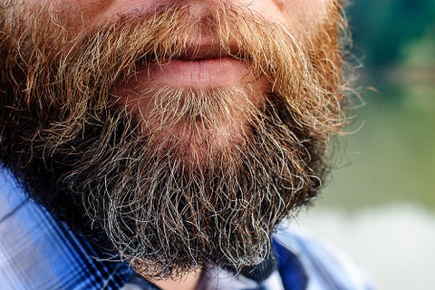 how to prevent beard split ends. Bohemian Beard Blog. beard care tip and tricks