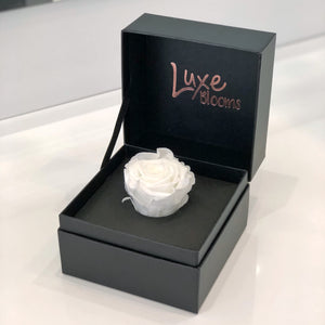 INTERSTATE: Single Preserved Rose Box (+ 7 more colours) - Luxe Blooms
