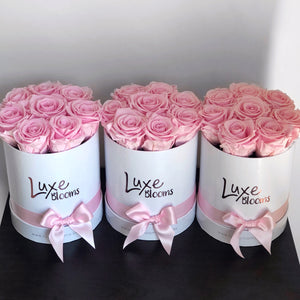 Preserved Pink Rose Box - Luxe Blooms