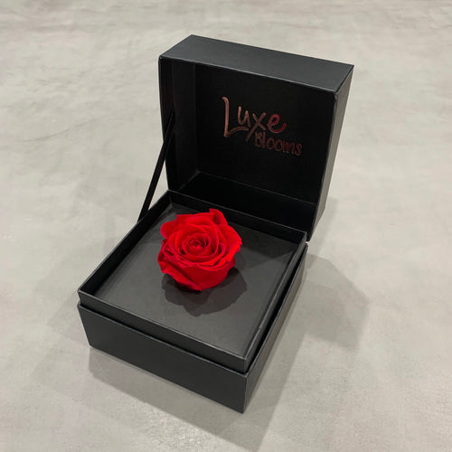ADELAIDE: Single Preserved Rose Box (+ 7 more colours)