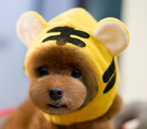 Cute Dog Cap