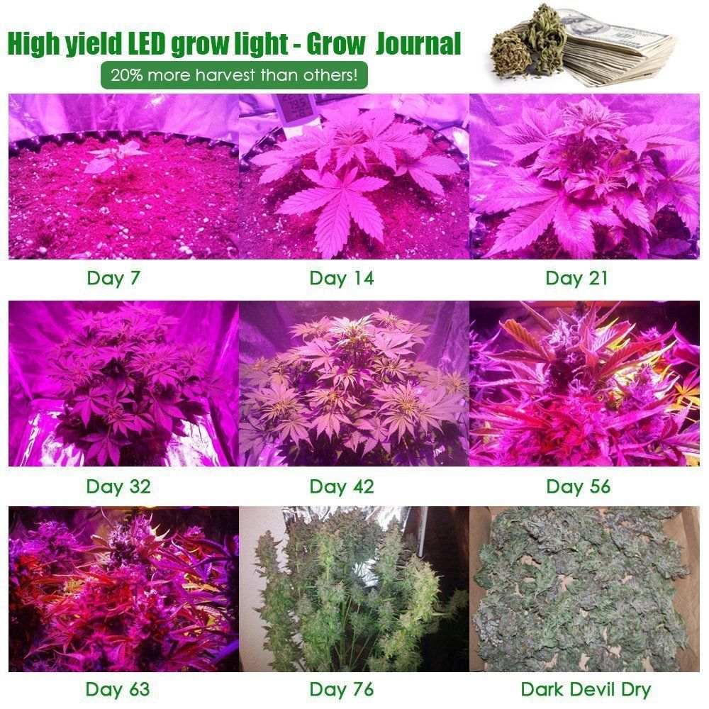 marijuana grow light