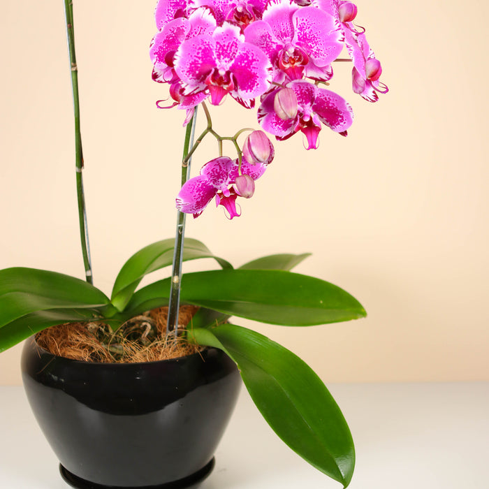 Dark Chocolate Mille Crepe 8 inch | Cake Together | Cake Delivery